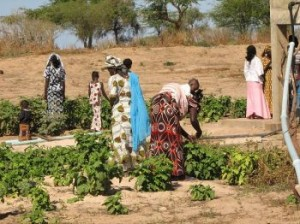 Women and girls in the Millennium Village of Potou, Senegal, tend to their irrigated vegetable crops, including eggplant, tomatoes and onions