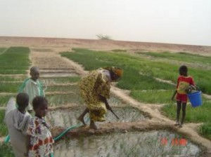 Malian woman irrigating her crops