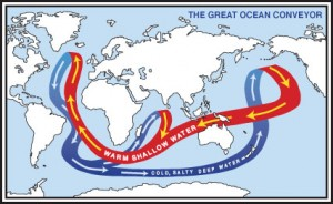 The Great Ocean Conveyor shapes the climate by moving heat around the globe.