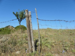 Fences protect crops.
