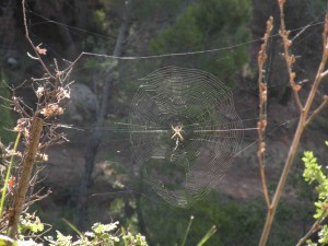 A spider spins an elaborate web.
