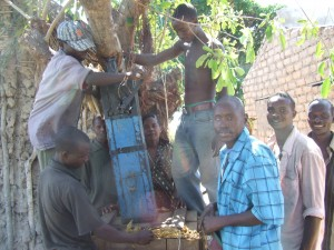 Tobacco farmers in Mbola Village pack down cured tobacco leaves into 70kg bags