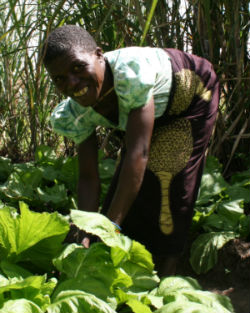 Community-based climate adaptation has helped Malawi farmers deal with worsening crop cycles