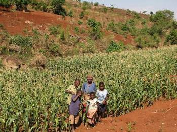 Maize field in Malawi, Africa. Photo by Dr. Ray Weil