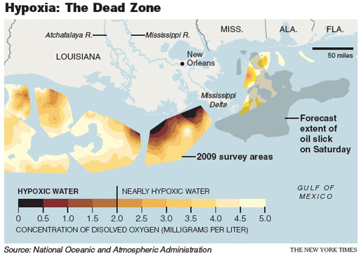 NY times graphic demonstrating the overlap of the hypoxic zone and the oil slick, as of May 8, 2010.