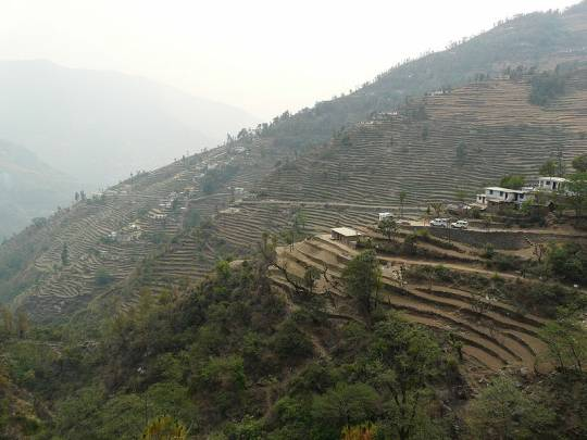 Terrace Farming in Uttarakhand, India