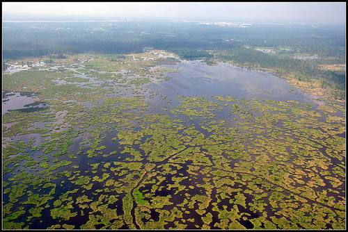 Louisiana Wetlands Seen from the Air. Source: Stevesheriw on Flickr