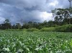 Soybean field, Mato Grosso, Brazil