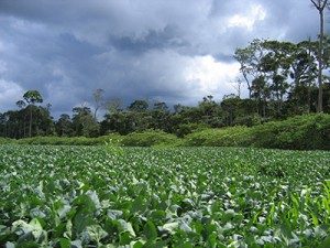 Soybean field, Mato Grosso, Brazil