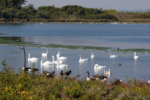 Jamaica bay a refuge for wildlife in new york city gets for Kew motor inn jamaica ny
