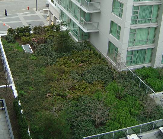 Victoria BC Marriott Green Roof. Source: Pnwra on Flickr.