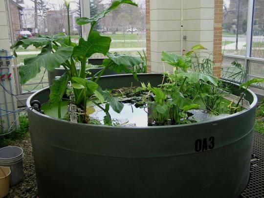 Biological Filtration System at Oberlin College
