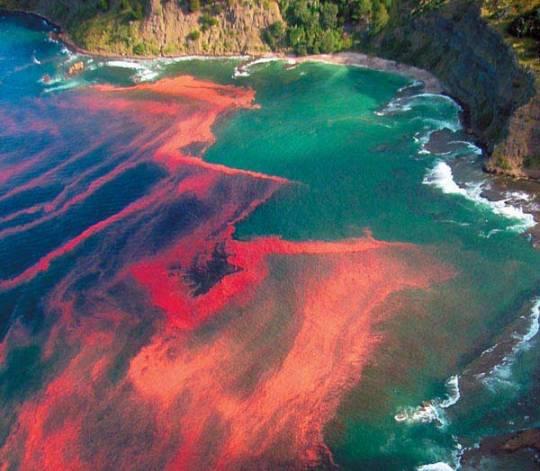 Red Tide. Source: Miriam Godfrey.