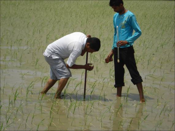 Professor Kamal Vatta prepares to install a tensiometer in a rice field.