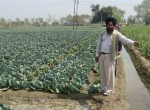 A progressive farmer in Punjab does well by growing  a diversity of crops, including vegetables. By intercropping his produce, he saves water as well.