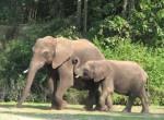 Photo by Follix - Elephants at the Kilimanjaro Safari in Disney's Animal Kingdom, in Orlando, Florida.