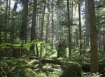 Tongass_national_forest_juneau_img_7501
