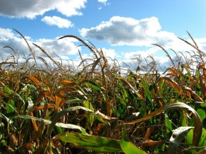 Climate-Ready Crops: The Pros and Cons