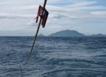 Seismic streamer with a 'bird' being deployed into the ocean