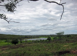Caatinga is the predominant type of vegetation found in the sertão. This photo was taken at the end of a good rainy season when water was still plentiful.