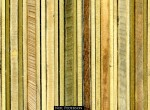 Tree Rings to the Rescue! Image: Neil Pederson