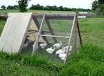 Organic Farm with Chicken Tractor