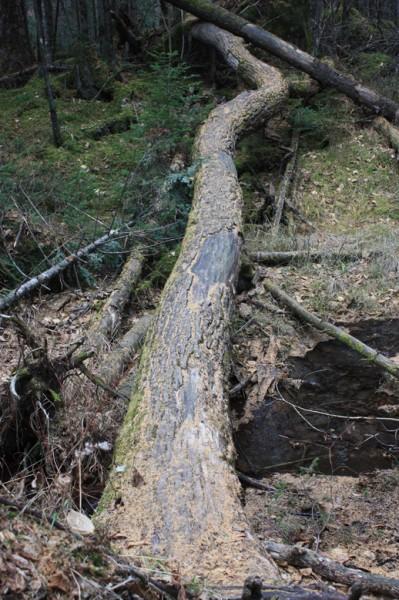 Megaflora tree