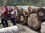 Logs of Oriental beech as backdrop for the 'gangstas' of the Borçka Depot. Photo: N. Pederson
