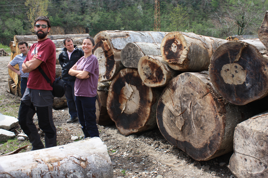Tree Ring Science In A Log Yard