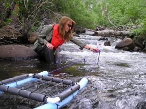 biodiversity, streams