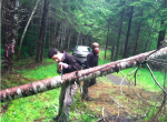 Clearing trees– an unadvertised skill for seismologists.