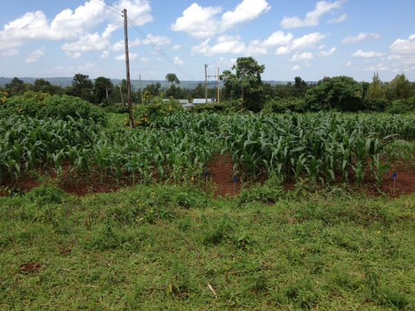 Kenya, TropAg research, farm fields