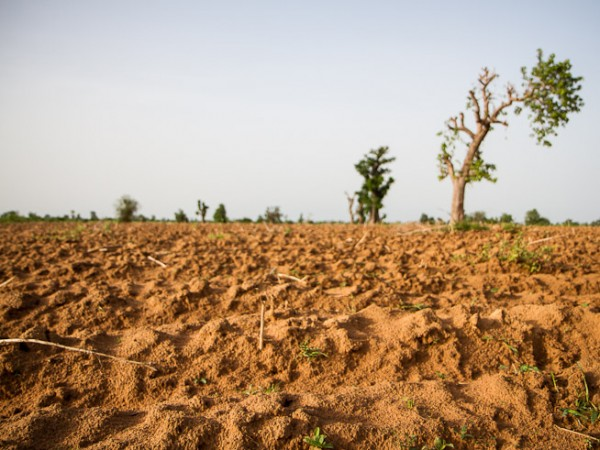 Diouna, Mali. Farmers here must contend with the Sahel's dry, sandy soil and whatever rains the clouds bring to grow millet, maize, sorghum and other crops. Photo: F. Fiondella/IRI