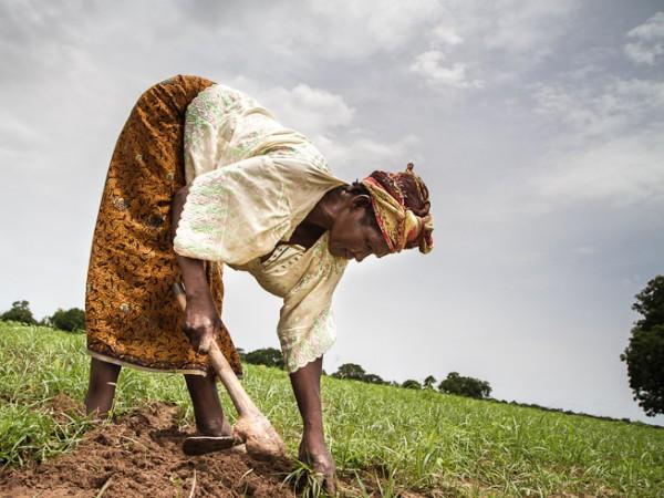 Fatoumata Dembéle tends to her vegetable garden in the village of Molobal, Mali. Photo: F. Fiondella/IRI