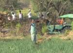 Farm workers, Ranga Reddy District, Andhra Pradesh, India (Carolyn Mutter/CCSR)