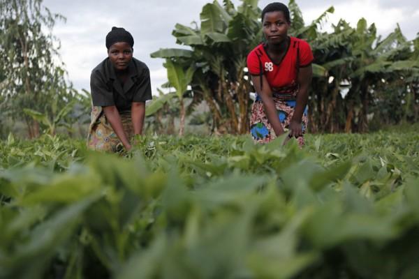 Mwandama, Malawi, Millennium Villages Project