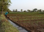 A farmer works on a water canal at a CWC project site in North Gujarat, India. Photo: Columbia Water Center.