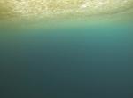 Arctic Algae