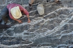 Rocks brought from earth's mantle react rapidly with carbon dioxide at the surface, producing these whitish veins.