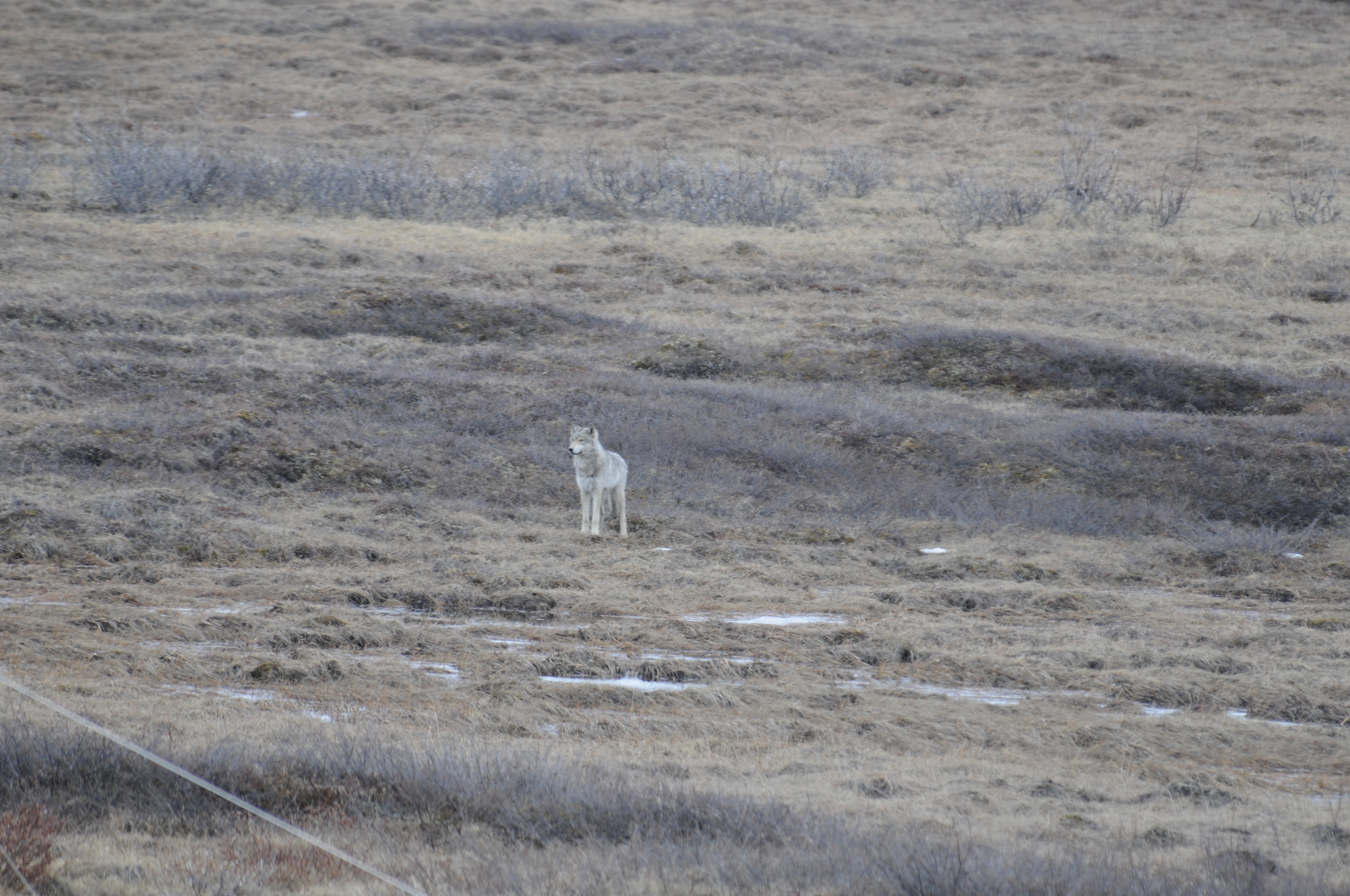 Strange Bedfellows In The Climate Change Saga Taiga To Tundra