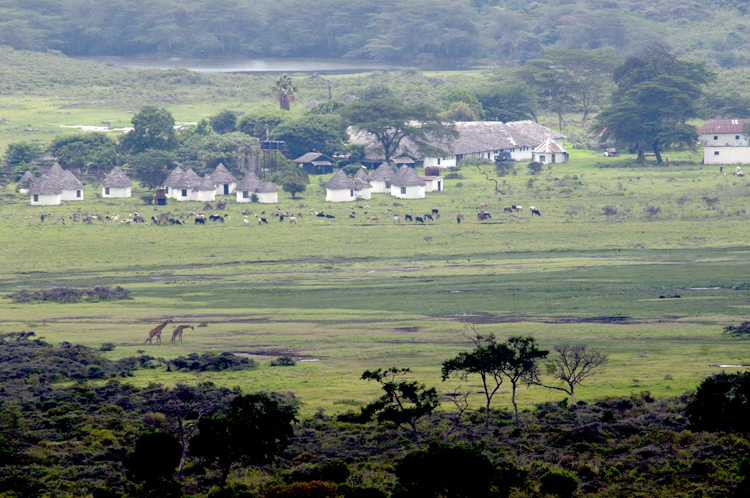 Agriculture and nature both provide services humans need.   Here, in Tanzania's Arusha National Park, nature and agriculture push up against one another (e.g., giraffes and native vegetation in the foreground, homes, farms, and livestock in the background).  Sustainable Intensification is the idea that we can increase food production without adversely affecting nature.  Can it be done?  (Photo credit S. Naeem).