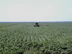 Herbicide spraying on corn. Photo: SoilScience@NCState