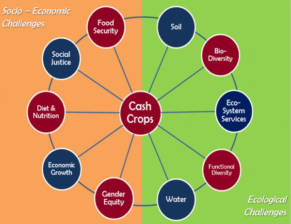 """A """"web of sustainability"""" surrounding cash crops. Each sector interacts directly and continuously with every other. By studying oil palm, one also touches issues such as gender roles, food security and biodiversity. Red nodes indicate the subject of our research."""