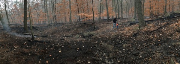 The aftermath of the November 2013 Clausland Mountain Fire. Photo: N. Pederson