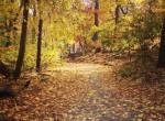 Autumn in Central Park. A. McDermott