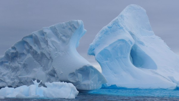 The color and shape of the icebergs form pieces of glacial ar (Photo M Turrin.