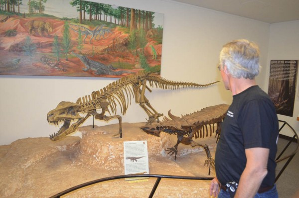 During the Triassic, dinosaurs were just a minor group, and most were quite small. The dominant creatures in this area were crocodilians and other fearsome reptiles, like these ones dug up and reassembled in the park museum. A painting at rear attempts to re-create what it looked like back then.