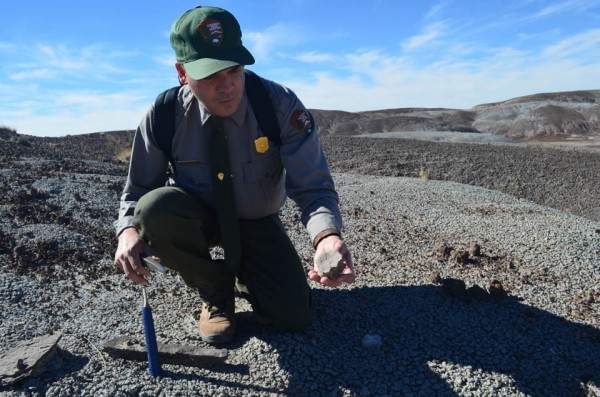 Park paleontologist Bill Parker picks up a fossilized vertebra from a reptile that probably lived in a shallow pond or swamp. Nearby, he and colleagues have unearthed skeletons of the giant reptilian <em>Revueltosaurus-- </em>a crocodile-like creature that at first was mistaken for a dinosaur. Discoveries like these have caused scientists to rethink the course of evolution during the Triassic.
