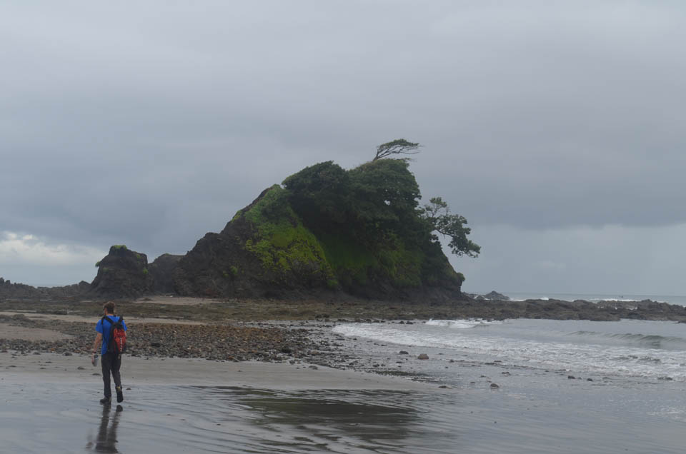 It is along the coast, with its constant tectonic uplift and violent erosion, where rocks are most exposed.  But with lack of roads and other obstacles, few sites are accessible by land. This wind-torn islet was reachable at low tide after a hike through the woods. It was volcanic in origin, but turned out to contain no picrite.