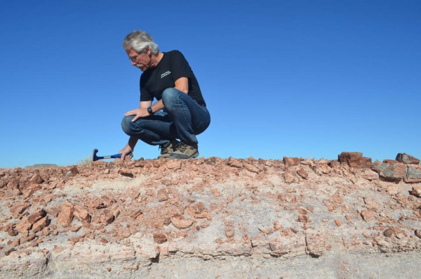 One goal in the coring project is exact dating of the wavy band of rock about three feet below Olsen, a few inches thick, marking the break between reddish rocks above and whitish ones below. Composed of tangled, cylindrical strands that could be tree roots or other debris, he thinks it may be the remains of a sudden mass extinction. It could line up with a well-dated giant meteorite that hit what is now southern Canada 215.5 million years ago—but only data provided by the core will tell. Olsen and others also intend to inspect this layer for other signs of a connection, including microscopic diamonds created on impact, and the rare element iridium, carried by asteroids. If his idea proves correct, it would represent the only known biological prelude to an even larger impact believed to have wiped out the dinosaurs 149 million years later.